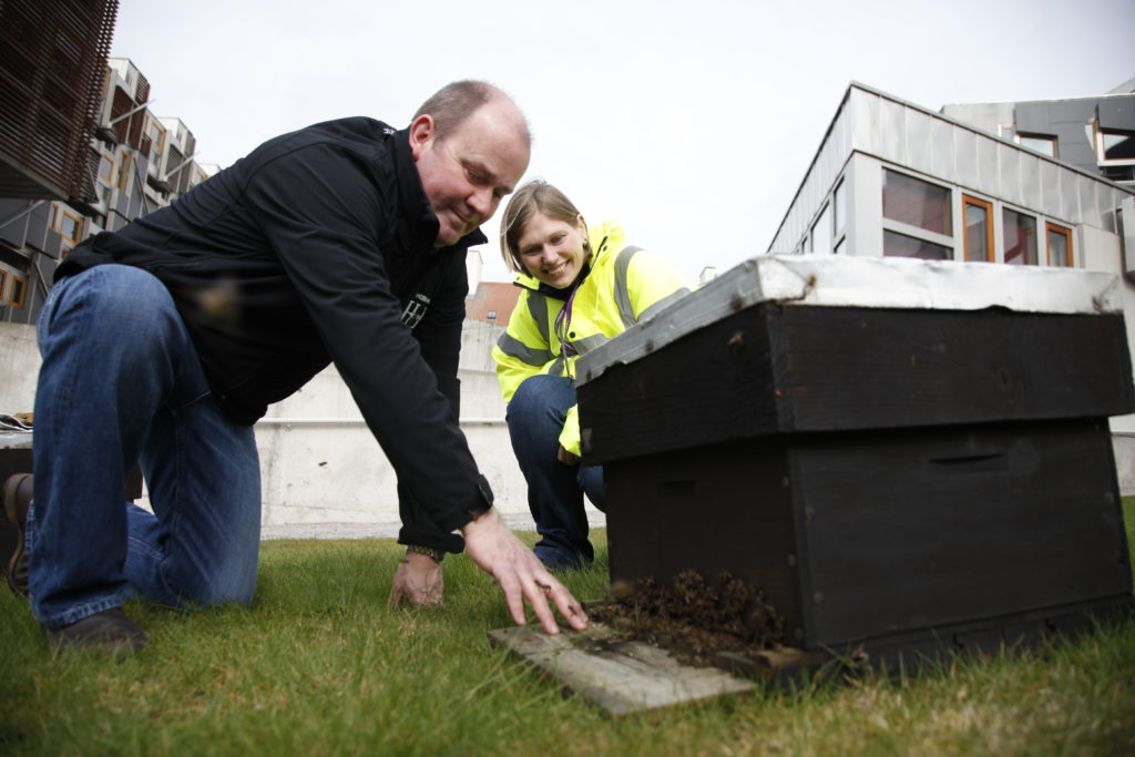 Stuart Hood of Hoods Honey installs four new beehives at the Scottish Parliament. These hives contain the native Black Honey bee from one of Willie Smith of Innerleithen's stains. The hives were fed with a mixture of sugar and water. 08 March 2016.   Pic - Andrew Cowan/Scottish Parliament