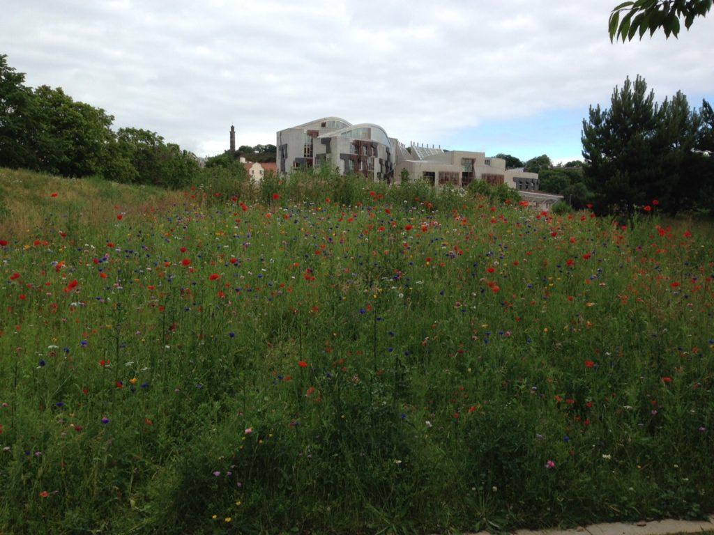 wild-flower-garden
