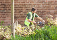 Green Spaces Create Happy Workplaces